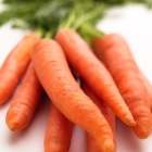 """Carrot, the """"filter""""of the organism"""