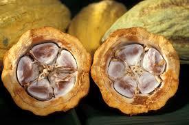Cocoa Bean - source: en.wikipedia.org