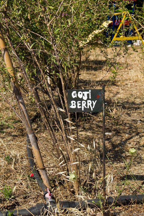 Μια-ημέρα-στη-Berryland-την-χώρα-των-Υπερτροφών